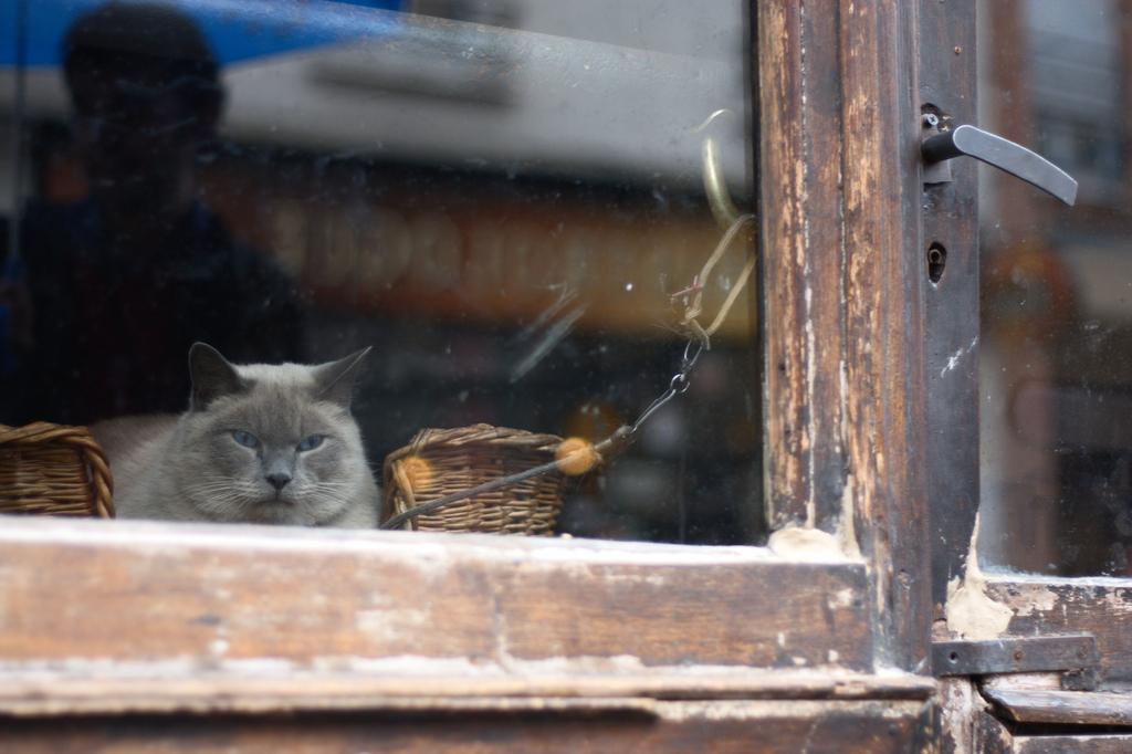 Le chat de Madame Paulo —©martathegoodone