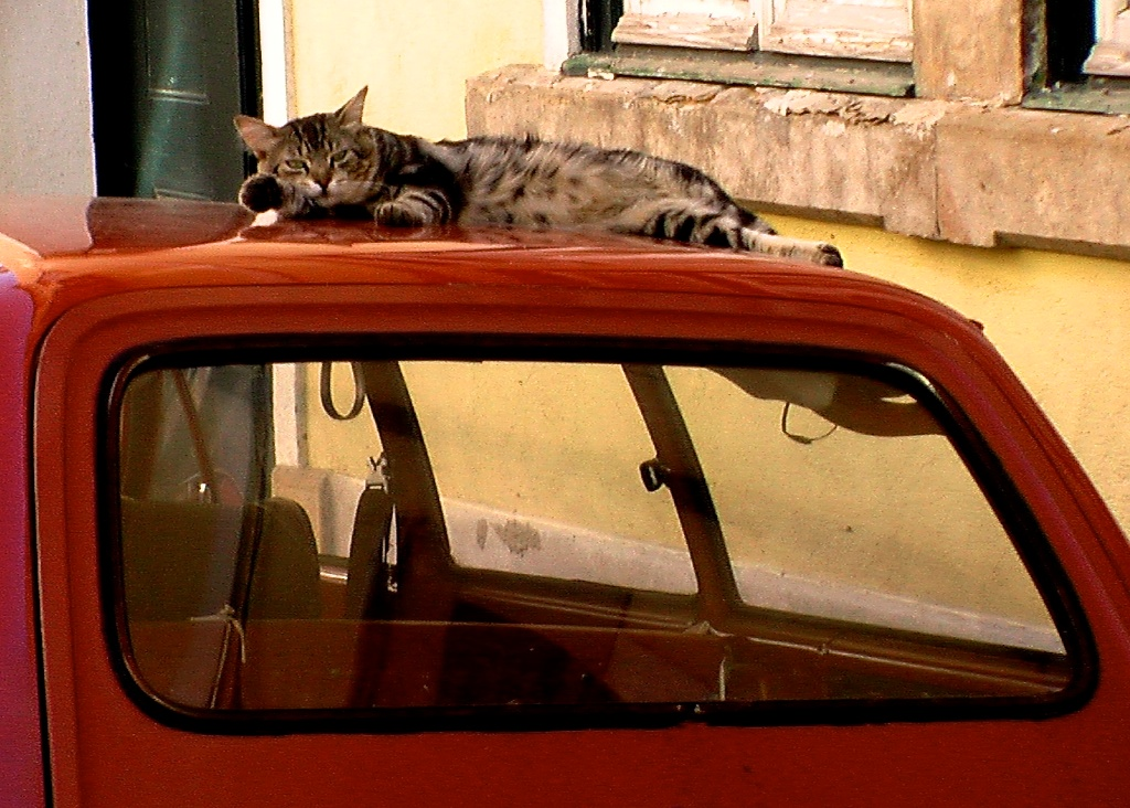 Chat à la voiture rouge—©Microtokyo