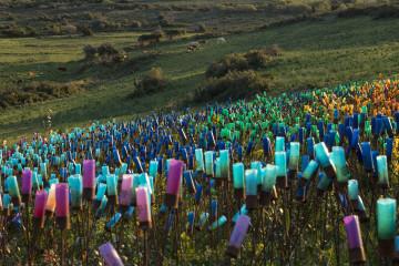 "Laetitia Carlotti, installation ""Arc-en-cible"", constituée de 22000 douilles de cartouches (route de Luri, 2012-2013)"